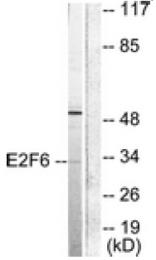 AP32232PU-N - E2F6
