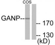 AP32233PU-N - MCM3AP