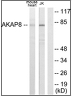 AP32251PU-N - AKAP8