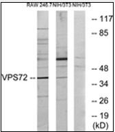 AP32269PU-N - VPS72