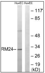AP32287PU-N - MRPL24