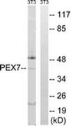 AP32319PU-N - Peroxin 7 / PEX7
