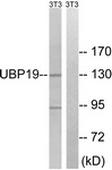 AP32328PU-N - USP19