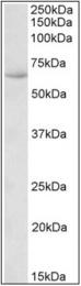 AP32347PU-N - HSPA13 / STCH