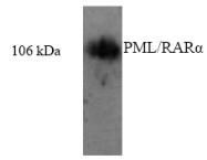 AP32355PU-N - PML / RNF71