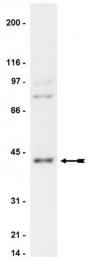 AP32455PU-N - PRKACA