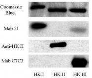 AP32497PU-N - Hexokinase-2