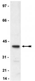 AP32537PU-N - NCF-4