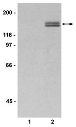 AP32573PU-N - PLCG1