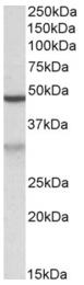 AP32699PU-N - MOB2 / HCCA2