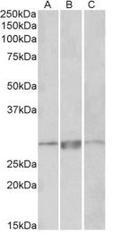 AP32718PU-N - PRRX1