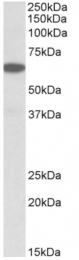AP32720PU-N - PLA2G4C