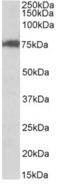 AP32732PU-N - CSTF3