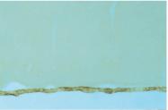 AP32777PU-N - GAT2 / SLC6A13