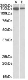 AP32803PU-N - MCF2L