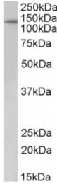 AP32805PU-N - PTCH1