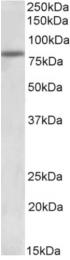 AP32822PU-N - ATF6 alpha