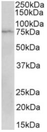 AP32823PU-N - CD19