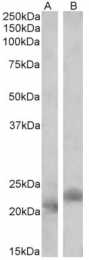 AP32825PU-N - CARD5 / PYCARD / ASC