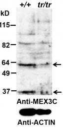 AP32849PU-N - MEX3C / RKHD2