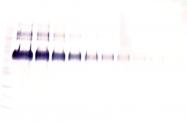 AP32851BT-S - Klotho