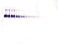 AP32851PU-S - Klotho