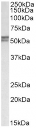 AP32857PU-N - DGAT1