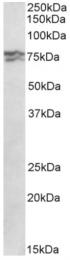 AP32936PU-N - RPA1