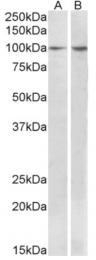 AP32937PU-N - BCAR1 / CRKAS