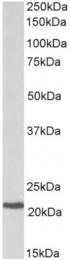 AP32938PU-N - CBFB