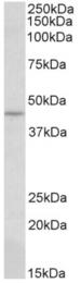 AP32945PU-N - CREB3