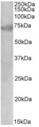 AP32949PU-N - DMTF1 / DMP1