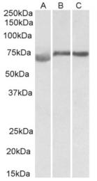 AP32950PU-N - DMTF1 / DMP1