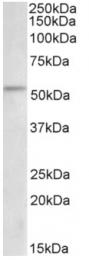 AP32963PU-N - CHK1