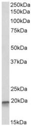 AP32965PU-N - EEF1E1