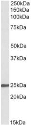 AP32973PU-N - NBL1