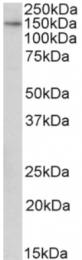 AP33017PU-N - TTLL4