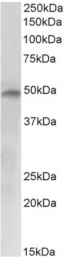 AP33019PU-N - E2F4
