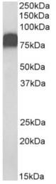 AP33023PU-N - CD44