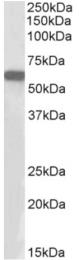AP33024PU-N - E2F1