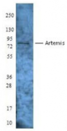AP33127PU-S - Artemis