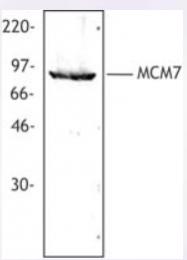 AP33167PU-S - MCM7