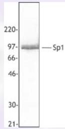 AP33175PU-S - SP1 / TSFP1