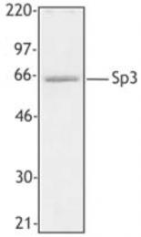 AP33176PU-S - SP3 / SPR-2