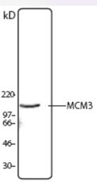 AP33183PU-N - MCM3