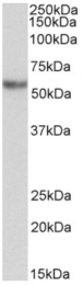 AP33192PU-N - Alpha-1-antitrypsin