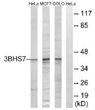AP33214PU-N - 3-beta HSD7 / HSD3B7