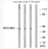 AP33217PU-N - NECAB3