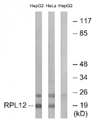 AP33220PU-N - RPL12