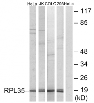AP33221PU-N - RPL35
